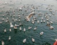 Zeemeeuw die op blauwe overzees vliegt Royalty-vrije Stock Afbeelding