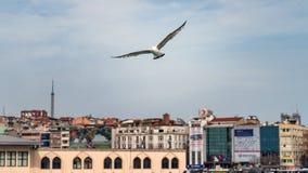 Zeemeeuw die op de Gouden Hoorn met cityscape op achtergrond, Istanboel, Turkije vliegen royalty-vrije stock fotografie