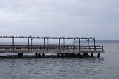 Zeemeeuw die op de pijler rusten Royalty-vrije Stock Afbeeldingen