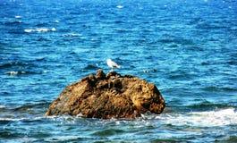 Zeemeeuw die op rots leunen Stock Fotografie