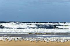 Zeemeeuw die op vlieg bij het strand wachten royalty-vrije stock afbeelding