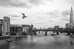 Zeemeeuw die over de rivier Theems vliegen Stock Afbeeldingen