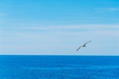 Zeemeeuw die over het blauwe overzees in Sardinige vliegen royalty-vrije stock foto