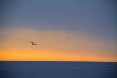 Zeemeeuw die over het overzees bij zonsondergang vliegen stock foto's