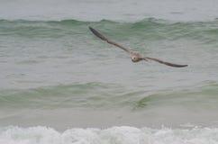 Zeemeeuw die over het overzees vliegt Stock Foto's