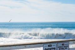 Zeemeeuw die over het overzees in Vreedzaam Strand vliegen royalty-vrije stock afbeelding