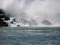 Zeemeeuw die over Niagara-rivier vliegen Stock Fotografie