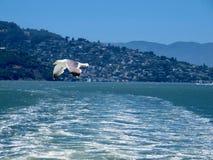 Zeemeeuw die over Oceaangolven vliegen royalty-vrije stock afbeeldingen