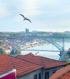 Zeemeeuw die over Porto, Portugal vliegen stock afbeelding