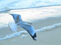 Zeemeeuw die over strand vliegt stock foto