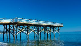 Zeemeeuw die Pijler verzamelen Stock Afbeelding