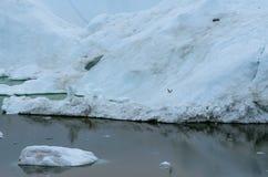 Zeemeeuw die voor de enorme ijsbergen, Ilulissat, Groenland vliegen royalty-vrije stock foto's