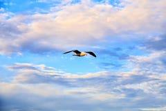 Zeemeeuw die, vrij in de wolken drijven Stock Foto