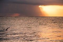 Zeemeeuw die in Vurige Zonsopgang over de Caraïbische Zee, Mexico vliegen royalty-vrije stock foto