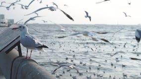Zeemeeuw die zich bij concrete omheining bevinden anderen die enkel rond bij haven vliegen Vrede stock video