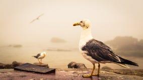 Zeemeeuw die zich op een kustmuur bevinden royalty-vrije stock afbeelding