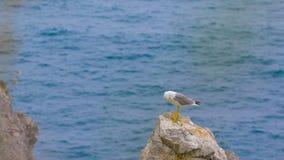 Zeemeeuw die zich op een rots door het overzees bevinden stock videobeelden