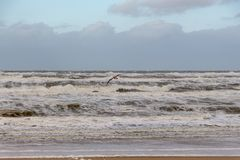 Zeemeeuw Egmond aan Zee, Nederland royalty-vrije stock afbeelding
