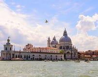Zeemeeuw en Basiliek Santa Maria della Salute, Venetië, Italië Stock Fotografie