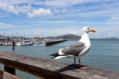 Zeemeeuw en de baai van San Francisco Stock Afbeelding