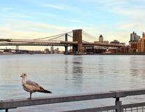 Zeemeeuw en de Brug van Brooklyn stock afbeelding