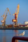 Zeemeeuw en kranen Stock Afbeeldingen