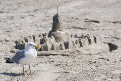 Zeemeeuw en zandkasteel Stock Fotografie