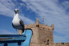 Zeemeeuw in Essaouira Marokko Stock Afbeelding