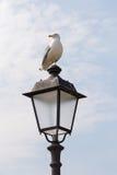 Zeemeeuw het stellen op de lantaarnpaal stock foto