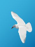 Zeemeeuw het vliegen vector illustratie