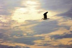Zeemeeuw het vliegen Stock Afbeelding