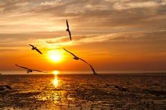 Zeemeeuw met zonsondergang Royalty-vrije Stock Foto's