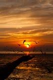 Zeemeeuw met zonsondergang Royalty-vrije Stock Foto