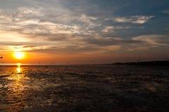 Zeemeeuw met zonsondergang Stock Afbeelding