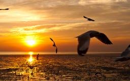 Zeemeeuw met zonsondergang Stock Foto's