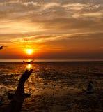 Zeemeeuw met zonsondergang Stock Fotografie