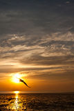 Zeemeeuw met zonsondergang Royalty-vrije Stock Afbeeldingen