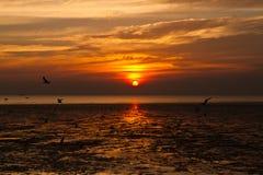 Zeemeeuw met zonsondergang Royalty-vrije Stock Afbeelding