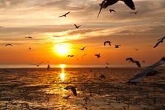 Zeemeeuw met zonsondergang Stock Afbeeldingen