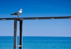 Zeemeeuw op blauwe achtergrond Royalty-vrije Stock Afbeeldingen