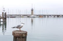 Zeemeeuw op de achtergrond van de vuurtoren van Meer Garda, Desenzano Di Garda, Italië Zeegezichtvuurtoren op de horizon met a royalty-vrije stock foto's