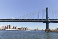 Zeemeeuw op de Brug van Brooklyn in New York stock afbeelding