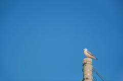 Zeemeeuw op de duidelijke blauwe hemel stock foto