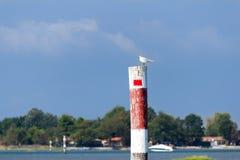 Zeemeeuw op de houten dolfijn wordt neergestreken die Stock Fotografie