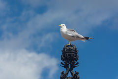 Zeemeeuw op de kroon in Helsinki Finland Royalty-vrije Stock Afbeeldingen
