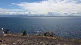 Zeemeeuw op de mooie kust tussen Slea-Hoofd en Dunmore-Hoofd bij de Hoofdaandrijving van Slea stock video