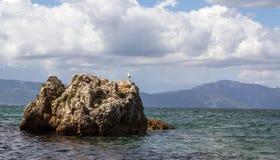 Zeemeeuw op de rotsen in het Adriatische Overzees Stock Foto