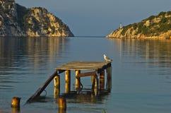Zeemeeuw op een oud roestig dok bij zonnige ochtend, Porto Koufo stock afbeelding
