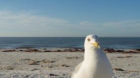 Zeemeeuw op het strand die u bekijken Stock Fotografie
