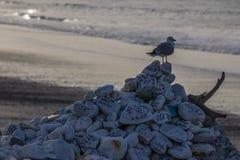Zeemeeuw op hoop van rotsen op strand stock foto's